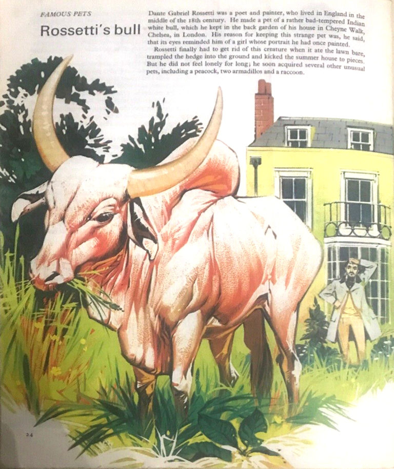 Finding Out 13 3 McBride Pets Rosetti Bull