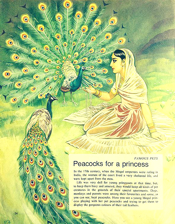 Finding Out 14 3 McBride Pets Peacock for a Princess