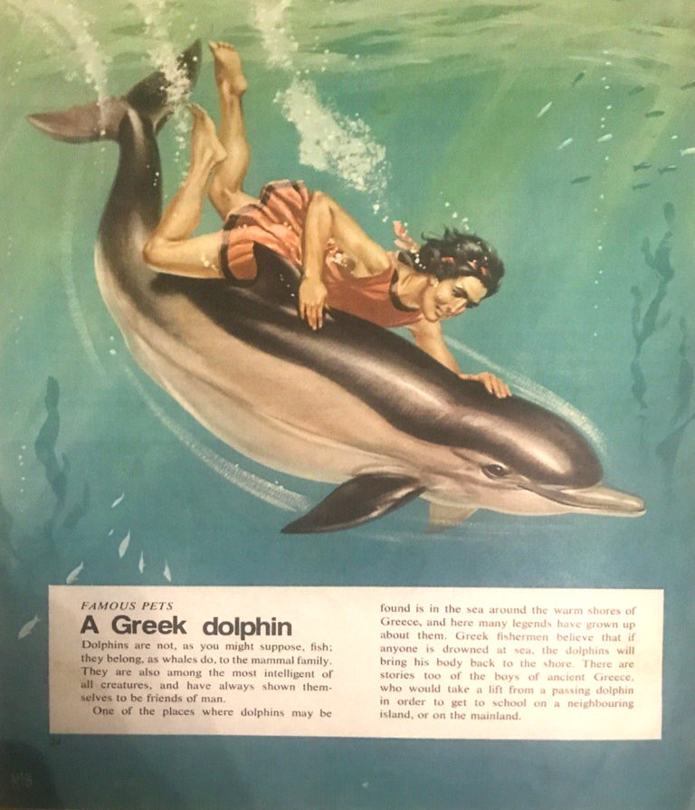 Finding Out 14 6 McBride Pets Greek Dolphin