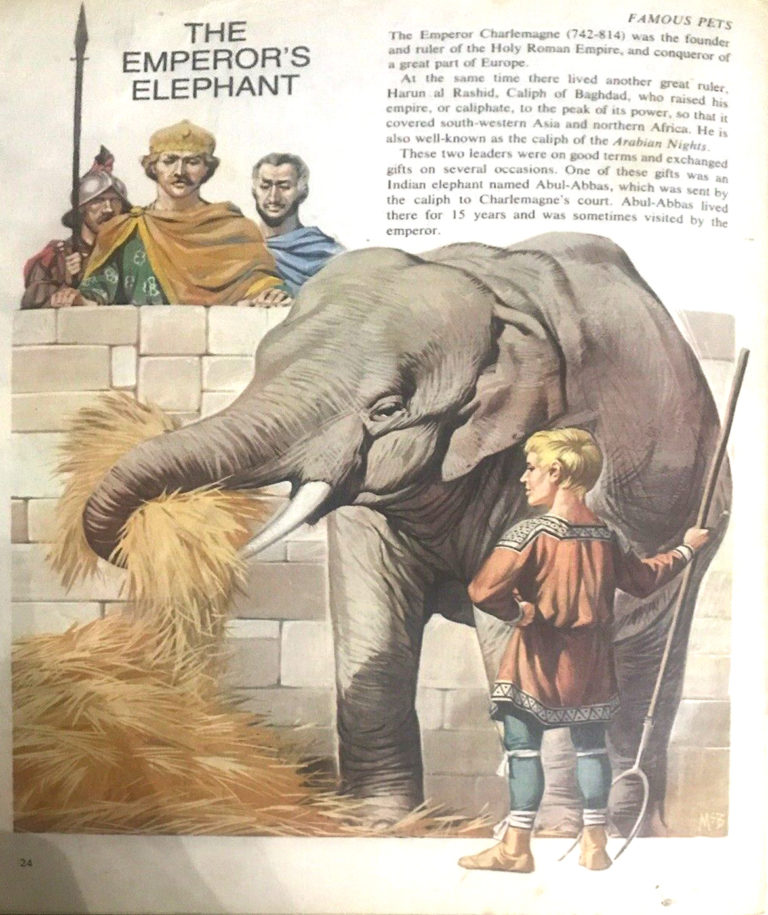 Finding Out 14 7 McBride Pets Emperors Elephant