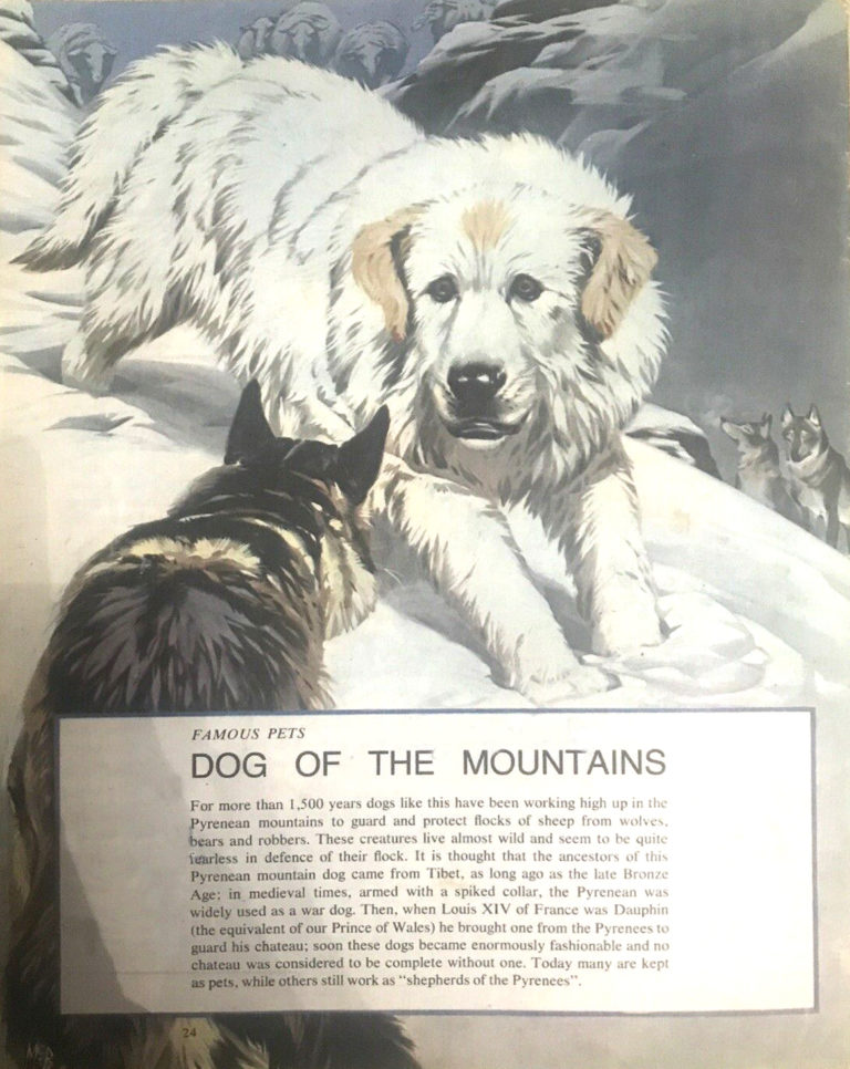 Finding out 15 8 McBride Pets Dog of the Mountains pyrenean